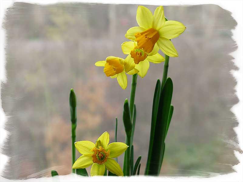 der kleine Frühling