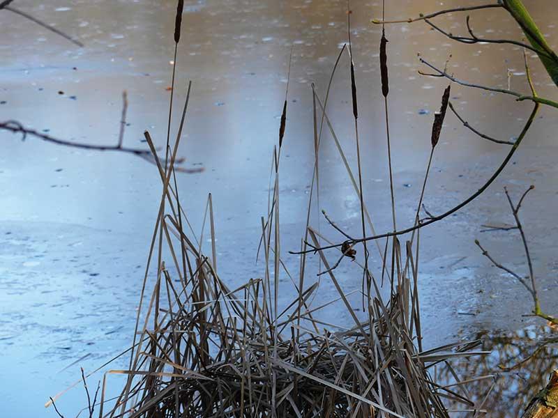 am Teich im Schönauer Park