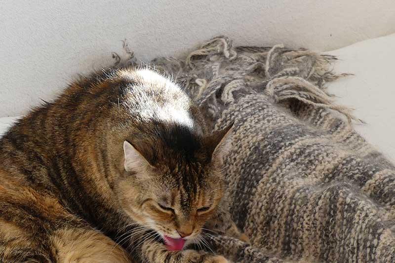 Penny hat das Tuch aus Gotlandwolle ergattert.