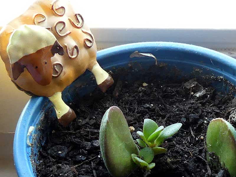 Pflanze züchten in einer zeit, in der Angst und Hoffnung eng beieinander liegen.