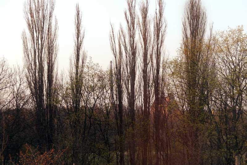 Blick aus dem Stubenarrest: der Lindenauer Hafen aus der Ferne