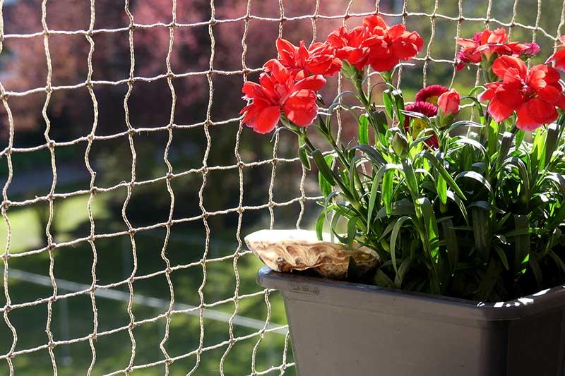 eine Insektentränke für regen Besuch auf dem Balkon