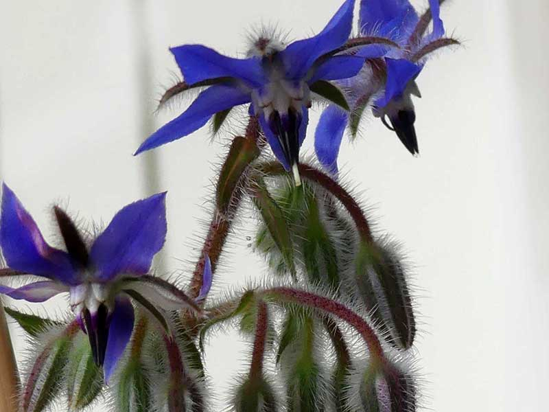 Blüten schauen vor dem Stuten backen