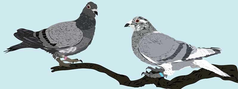 Die Sanftheit der Taube – eine schöne Zufallsentdeckung.