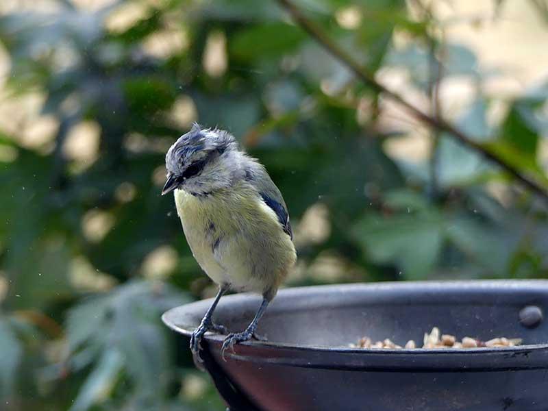 Futter für die hungrigen Vögel
