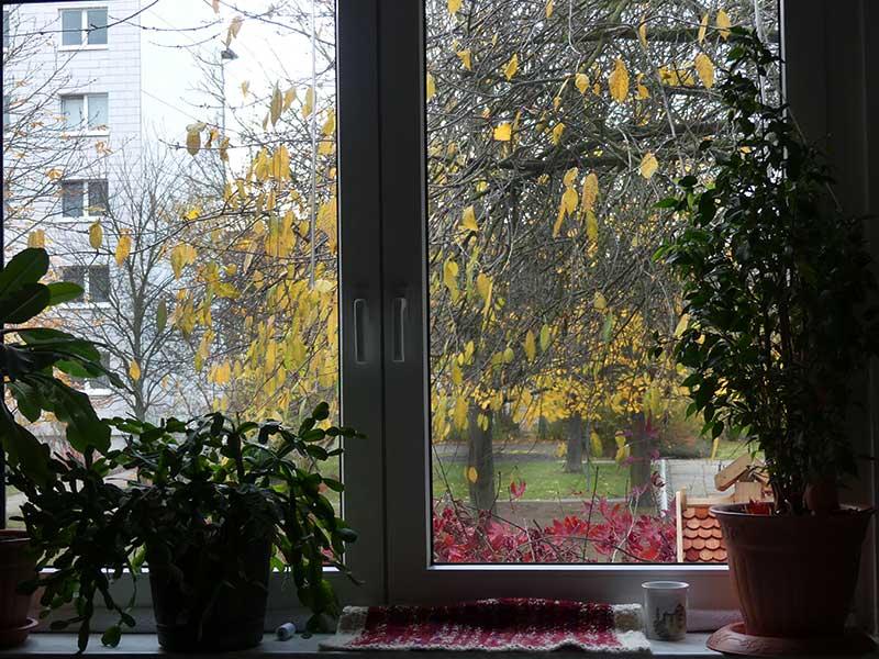 gute Laune am Herbstfenster
