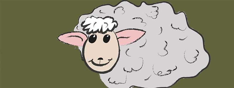 Die ersten Socken gehen auf die Reise. Ein Loblied auf die Schafwolle.