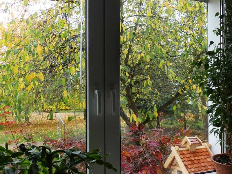 Veränderung - der Baum vor dem Fenster gibt den Himmel preis