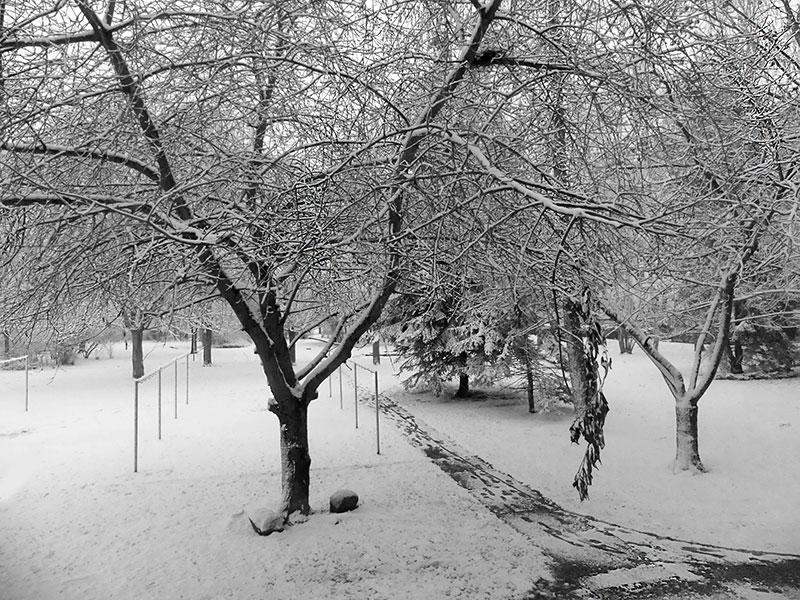 Schnee auf dem Kirschbaum