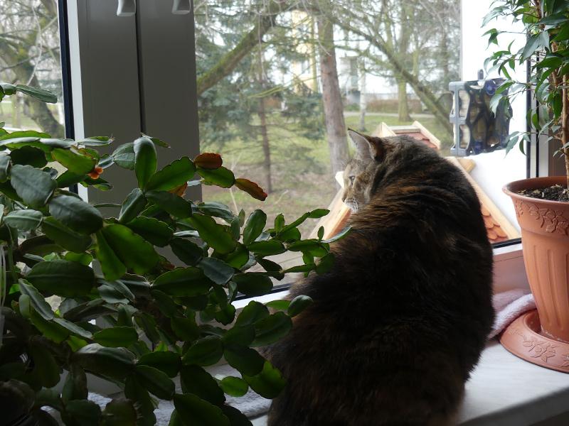 Spionageposten jetzt muss geteilt werden mit Tomatenpflanzen