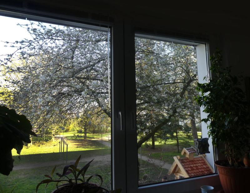 eigentlich ist das am Fenster der Katzenplatz von Cheffe Penny