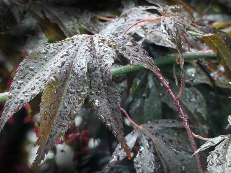 Regenzeit - Zeit für Geschichten
