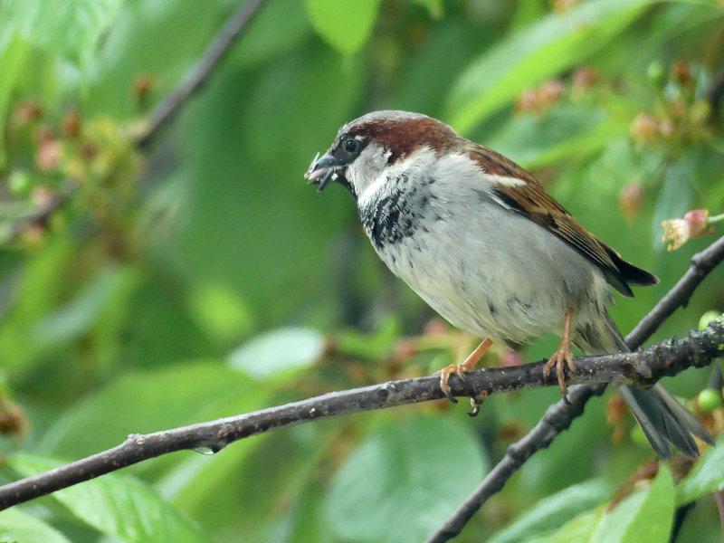 Hofgeschichten - Jungvögel werden gefüttert