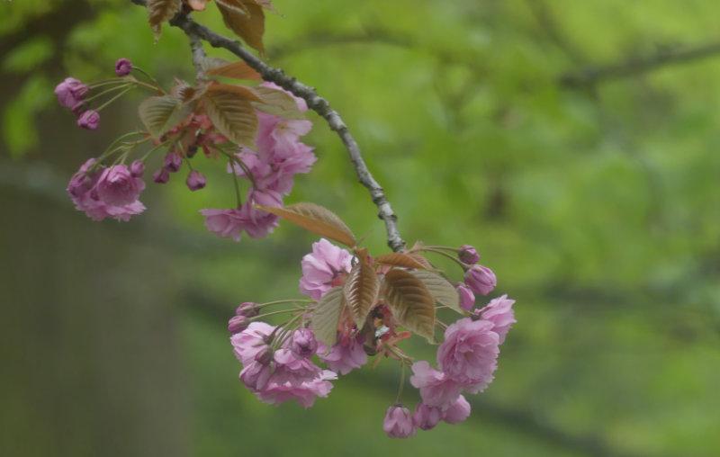 Hofgeschichten: rosa Blüten