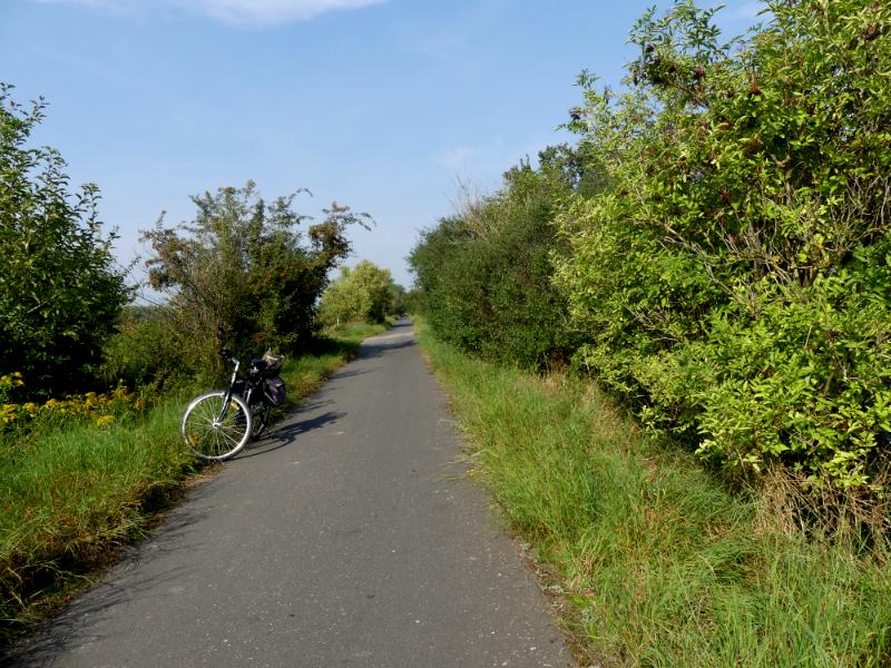 auf der Suche nach Holunder am Elster-Saale-Radweg